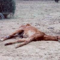 dead_horse_again (1)