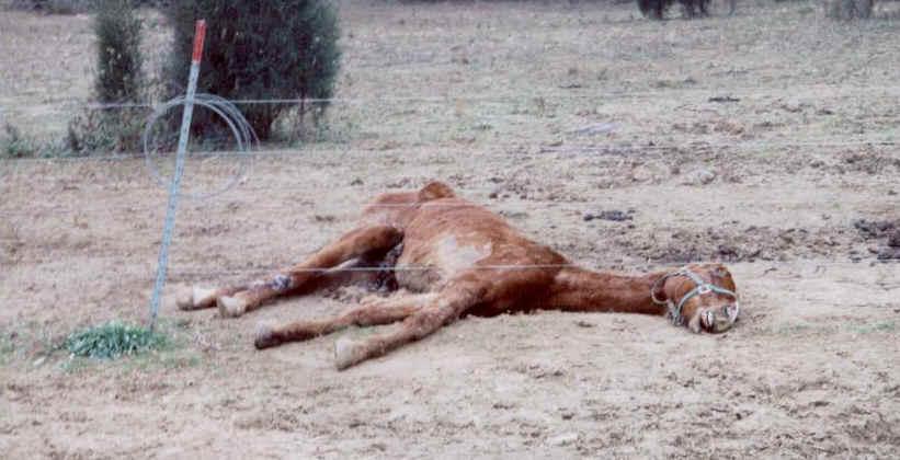 Dead Horse Quotes Quotesgram